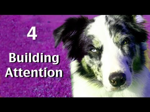 Building attn game 4- clicker dog training tricks
