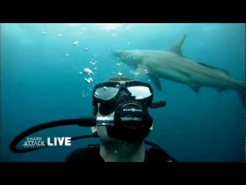 'Shark Attack Experiment LIVE' - Dangerous Waters