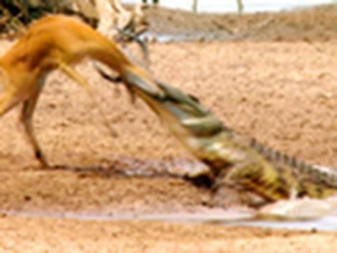 Crocodile Stealth Strike