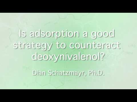 Is adsorption a good strategy to counteract deoxynivalenol?