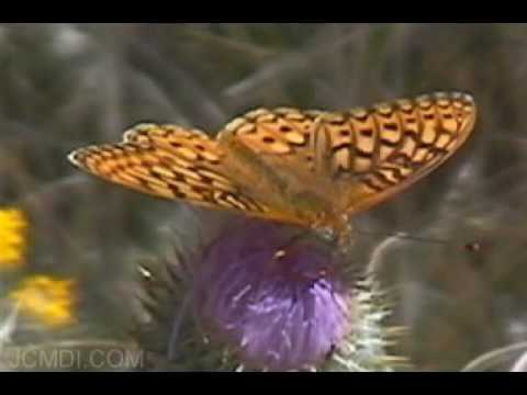 Spectacular Butterflies Animated Slideshow