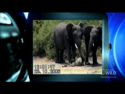 Baby Elephant Collapse