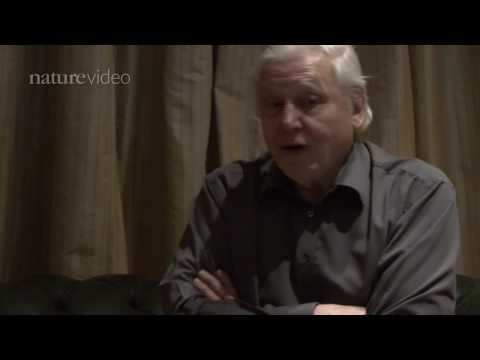 PART 1: David Attenborough on Darwin - by Nature Video