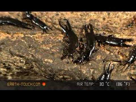 Cave alive with spiders and insects