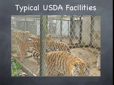 USDA Fails Animals and Public