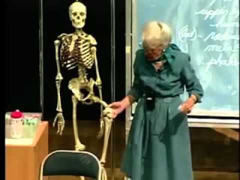 Saylor BIO302: Skeletal System Lecture 2