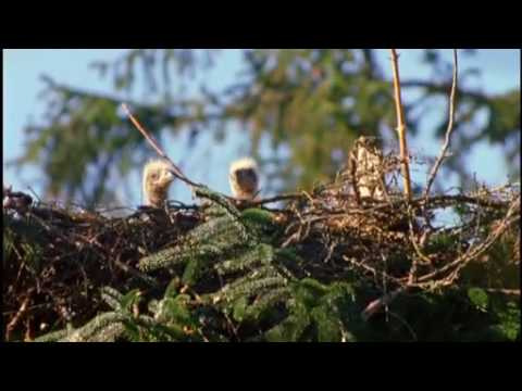 NATURE | Eagles of Mull | Preview | PBS