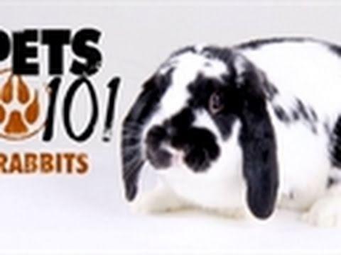Pets 101- Rabbits