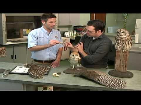 Owl Vomit