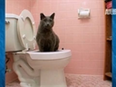 Must Love Cats- Potty Trained Kitty