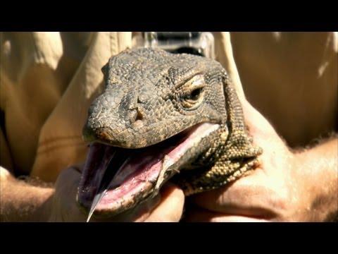 Python Hunters - Water Monitor Roundup