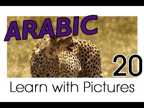 Learn Arabic - Arabic Safari Animals Vocabulary