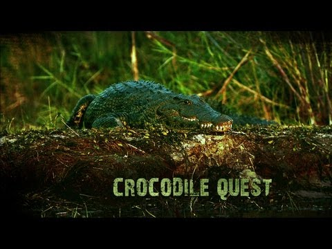 Diving with Nile crocodiles: Croc Quest series trailer