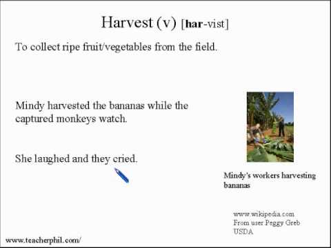 Learn Vocabulary and Pronunciation English Lesson 35: Banana!