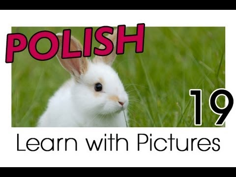 Learn Polish with Pictures - Farm Animals