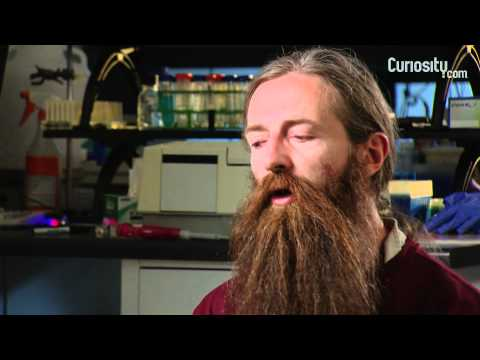 Aubrey de Grey: Aging and Disease