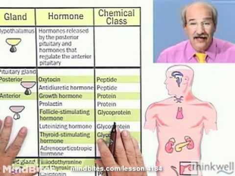 Biology: The Endocrine System