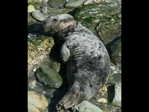 Ocean Pollution Images.wmv