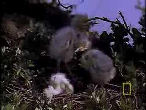 Snowy Egret's Nest