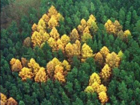 The Larch (and an infamous swastika)