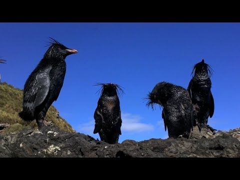 National Geographic Live! - Tristan da Cunha Oil Spill