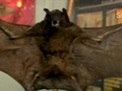 Oddities- Bat In Glass