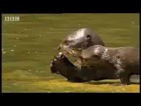 Rainforest animals of the Amazon jungle  - BBC wildlife