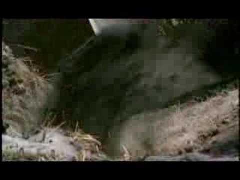 NATURE | Crime Scene Creatures | Preview | PBS