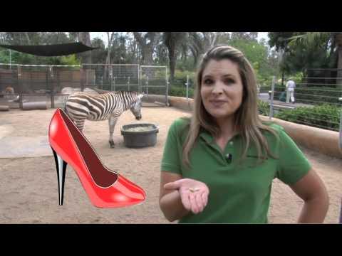San Diego Zoo Kids - Zebras