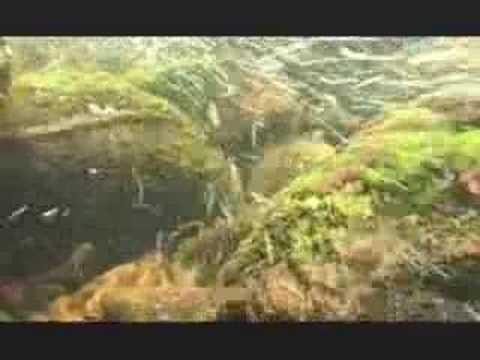 NATURE | Ireland | A Salmon's Journey | PBS