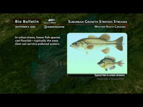 Science Bulletins: Suburban Growth Stresses Streams