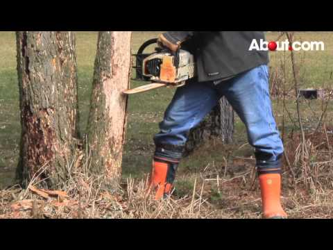 Tips for Felling a Tree Using a Chainsaw