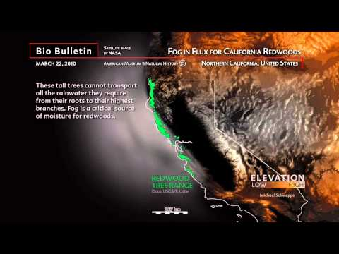 Science Bulletins: Fog in Flux for California Redwoods