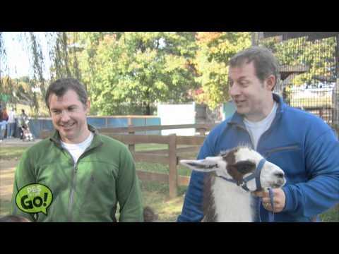 Wild Kratts | Llama | PBS KIDS GO!