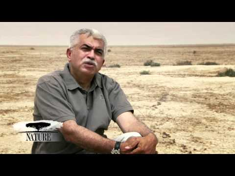 NATURE | Braving Iraq | Remembering the Marshes | PBS