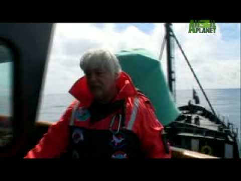 Whale Wars - How to Harass Whalers