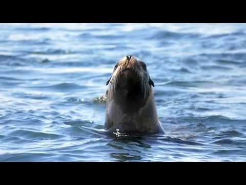 The Coolest Stuff On The Planet: Sea Lions, Sperm Whales and the Sea of Cortez
