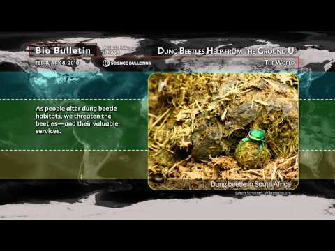 Science Bulletins: Dung Beetles Help from the Ground Up