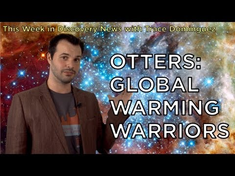 TWiDN: Otters: Global Warming Warriors