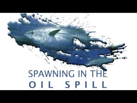 Spawning In The Oil Spill