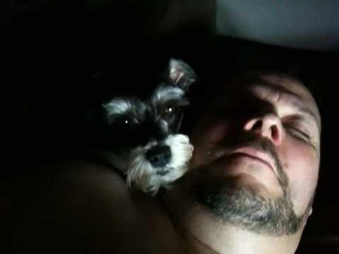Sunny on a fluffy overstuffed pillow (me)