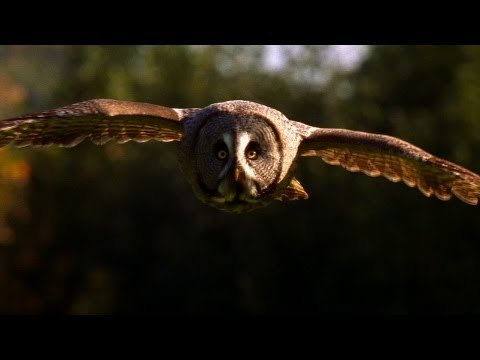 World's Deadliest - Super-Hearing Helps Owl Hunt