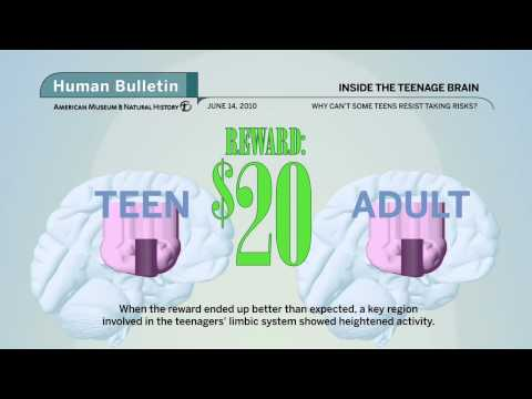 Science Bulletins: Inside the Teenage Brain