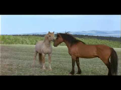 "PBS PREVIEWS | Nature ""Cloud: Challenge of the Stallions"""