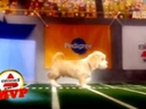 Puppy Bowl VII MVP