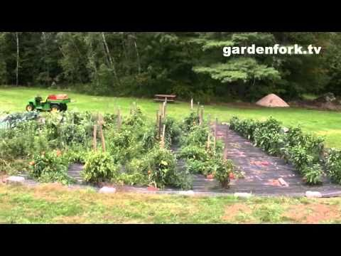 Weed Free Vegetable Garden : GardenFork.TV