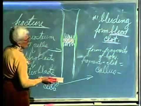 Saylor BIO302: Skeletal System Lecture 6