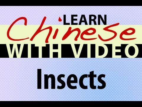 Learn Chinese with Video - Insects