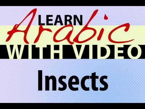 Learn Arabic with Video - Insects