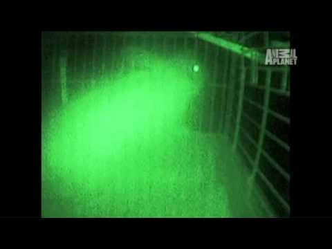 Finding Bigfoot-What Is That?